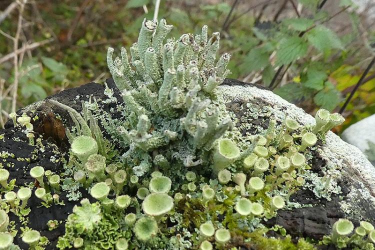 lichen fence post