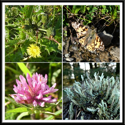 lichen, flower, painted lady and clover
