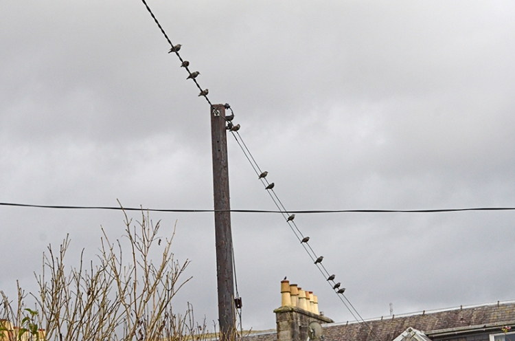 many starlings