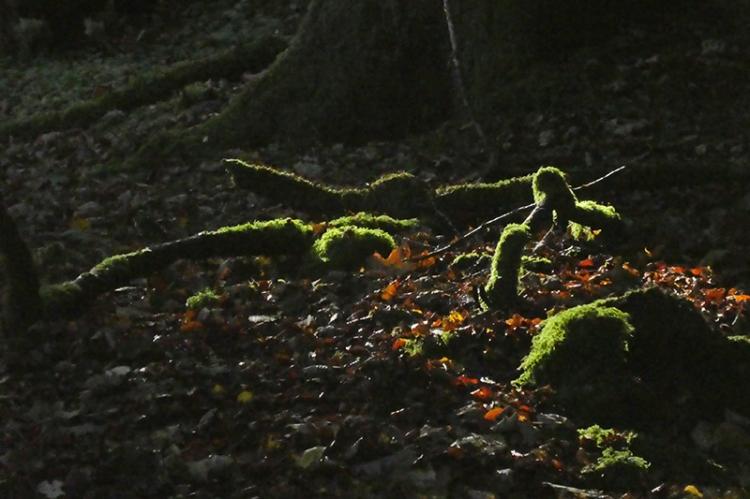 moss in wood besode esk