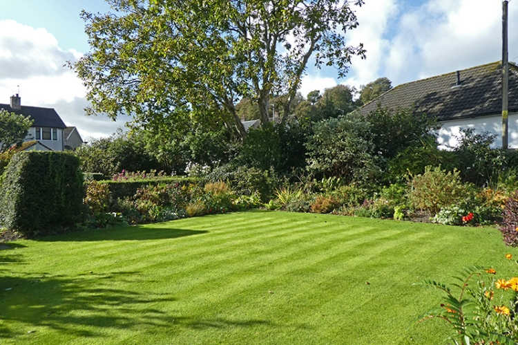 mown lawn october