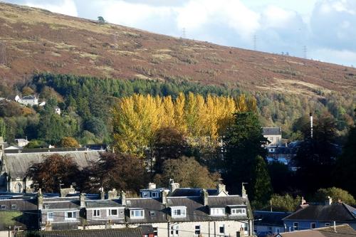 poplars from scotts knowe
