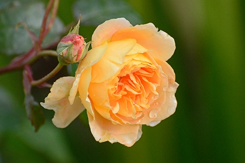 princess margareta after rain