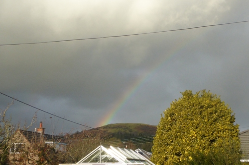 rainbow from garden