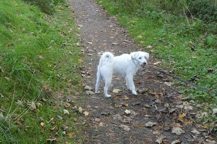 riley walk
