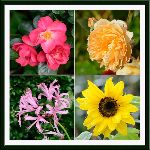 roses, nerine, sunflower