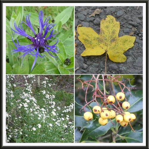 rowanburn plants
