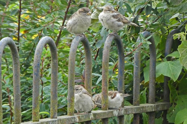 sparrows looking both ways