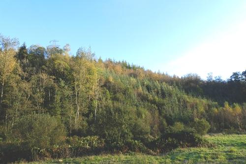 tarras wood bank