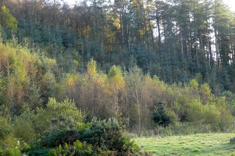 tarras wood colour