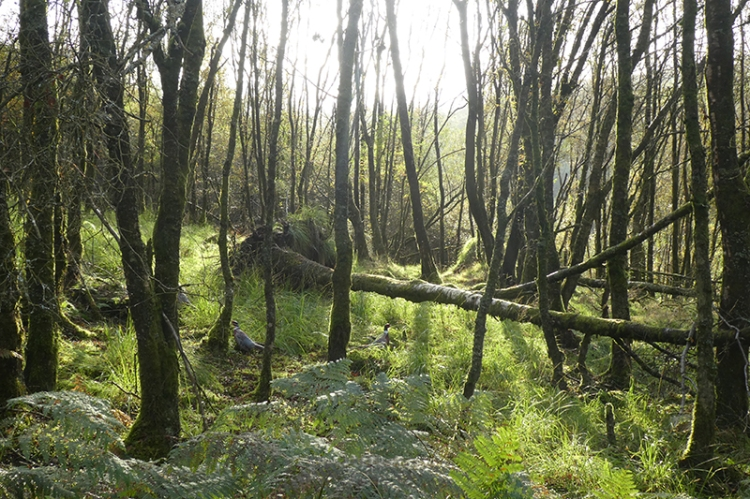 tarras wood into sun