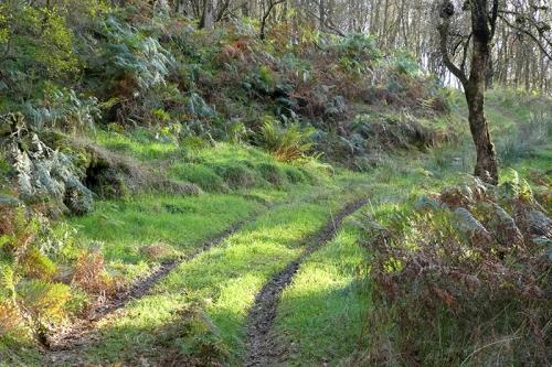 tarras wood track