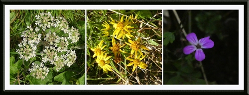 three wild flowers october