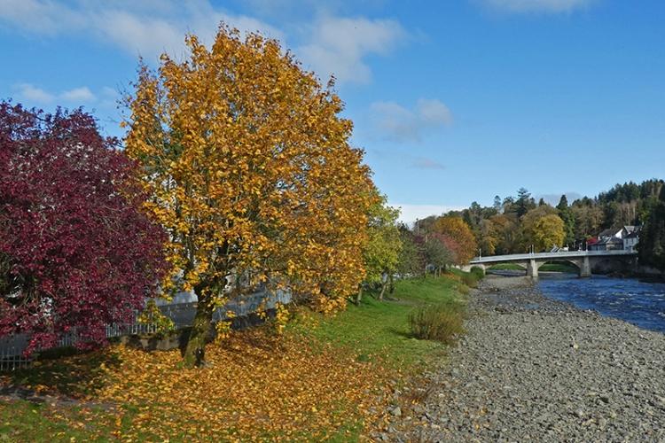 tree at suspension bridge