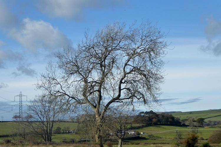 tree no leafs