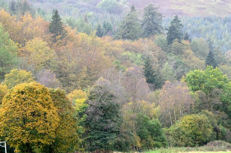 trees across castleholm
