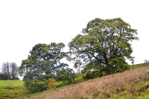 trees at irvine House
