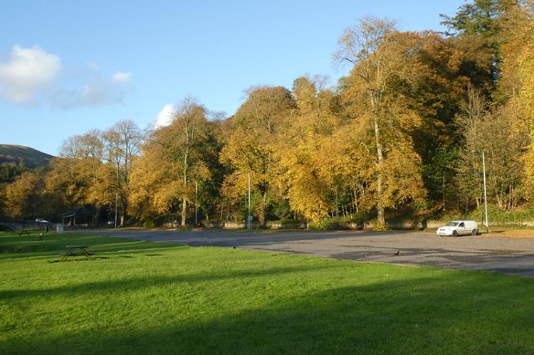trees by A7 kilngreen