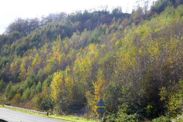 trees on new A7
