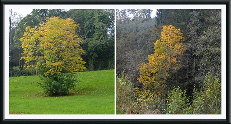 two colourful trees