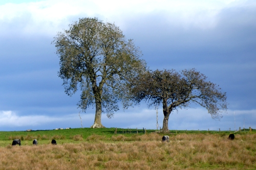 two trees with leaves