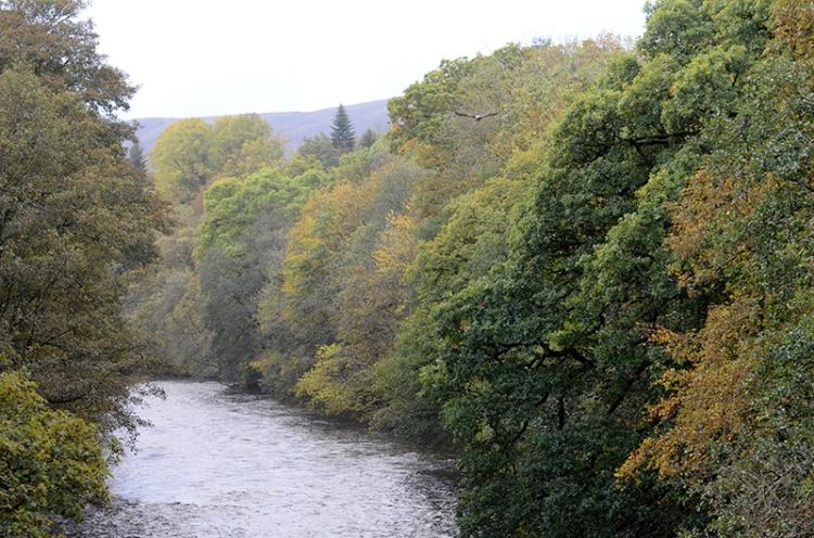 upriver from jubilee bridge october