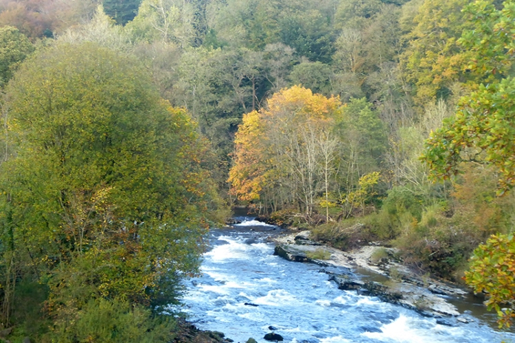 view from hollows bridge october