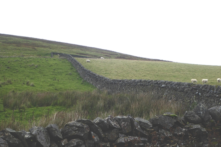 wall at ewes