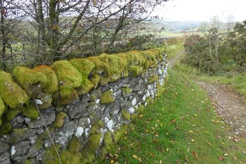 whita wall