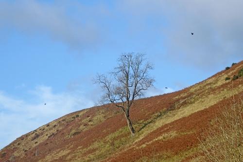 bare tree near quarry