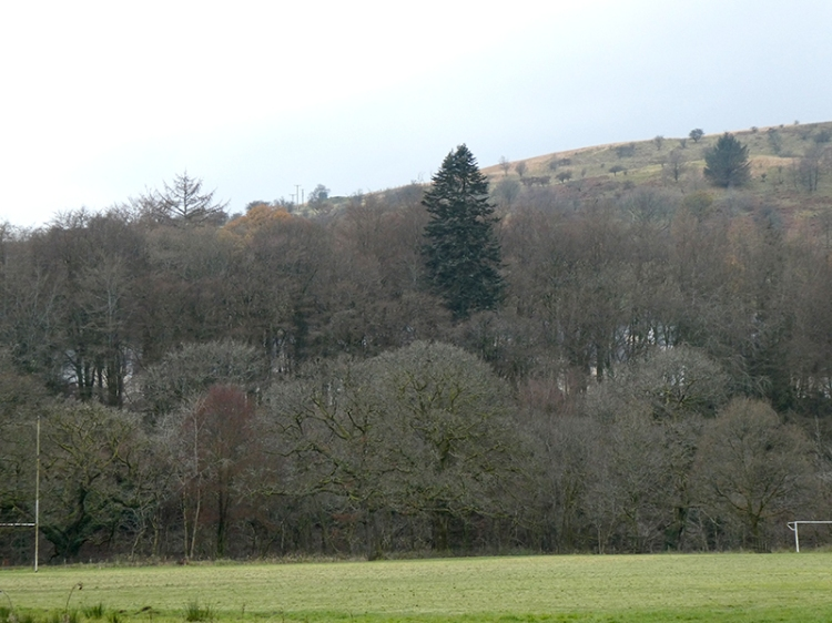 bare trees on bank