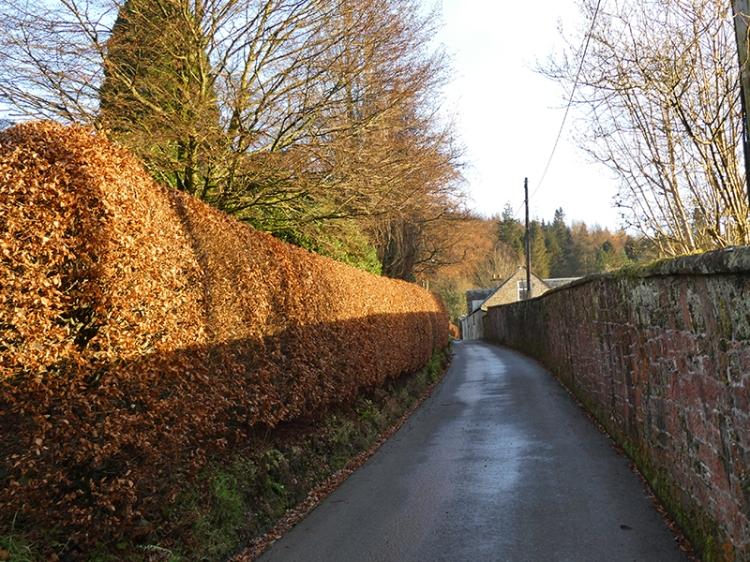 beech hedge hallpath