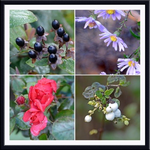 berries and flowers november