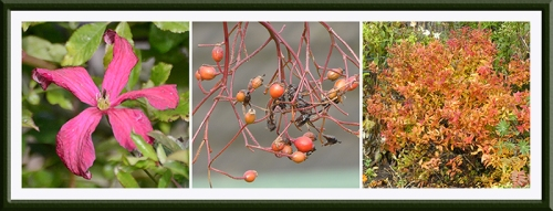 bloom, berry and bush