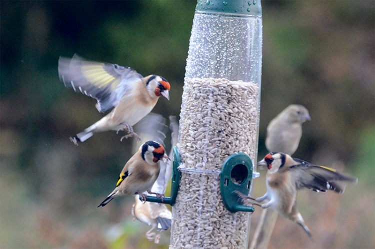 busy time at new feeder