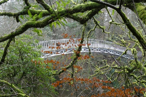 duchess bridge through mossy tree