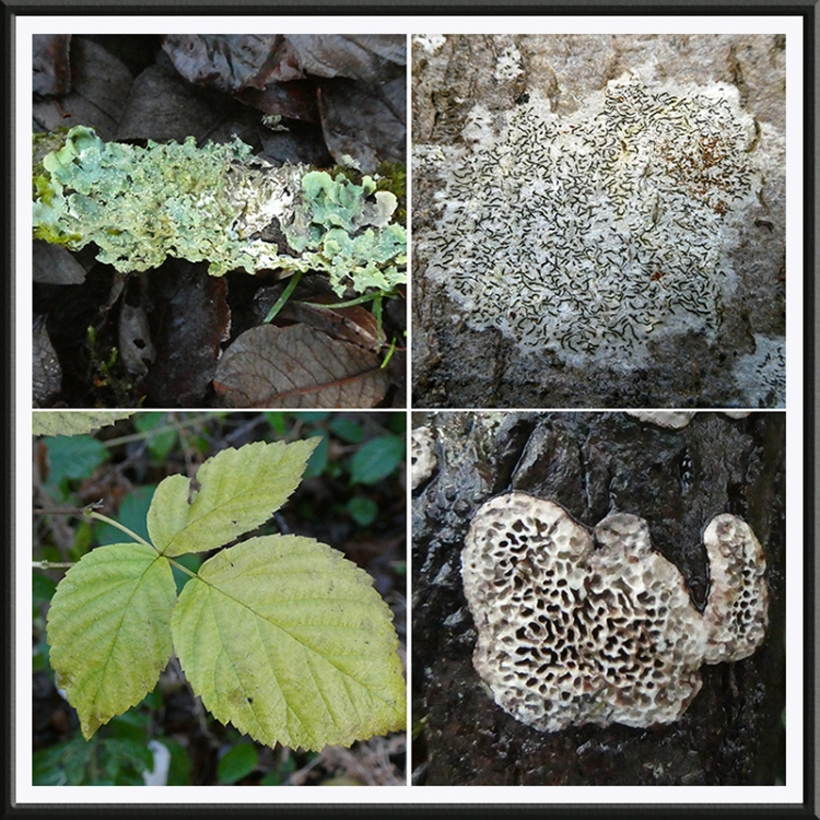 four thing son old railway fungus