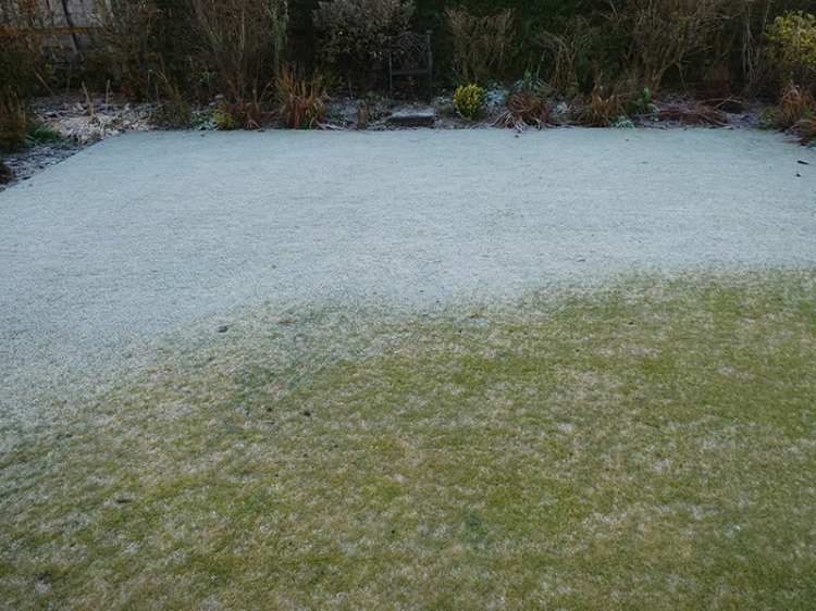 frosty front lawn