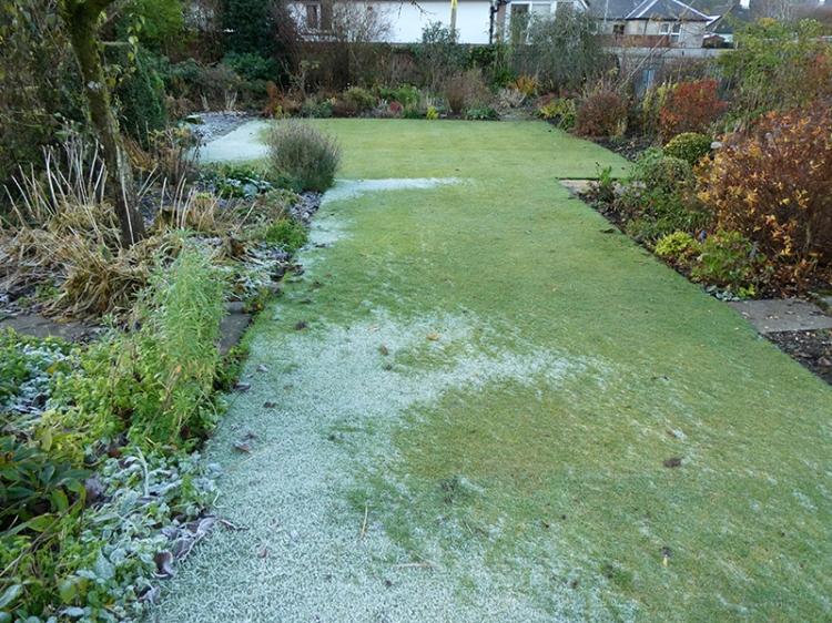 frosty middle lawn