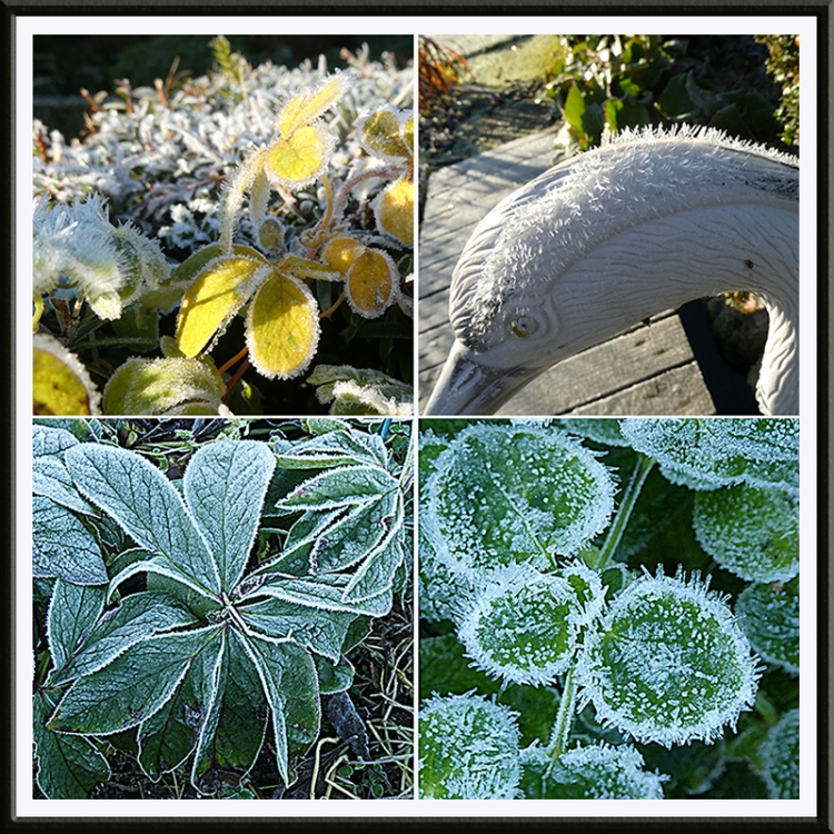 frozen garden nov