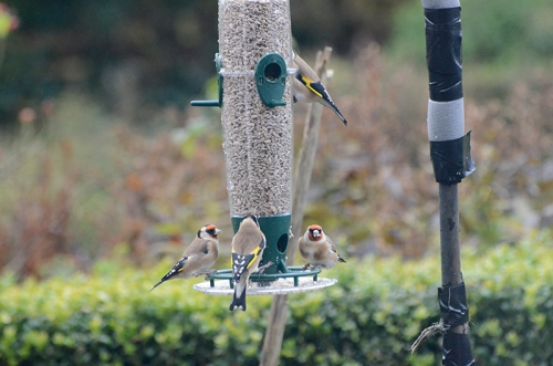 full house at new feeder