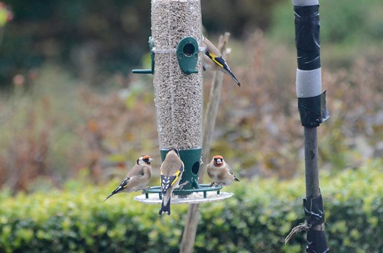 full house at new feeder