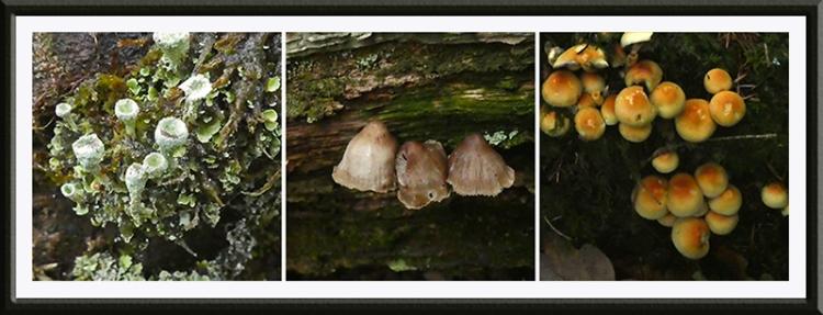 fungus and lichen november