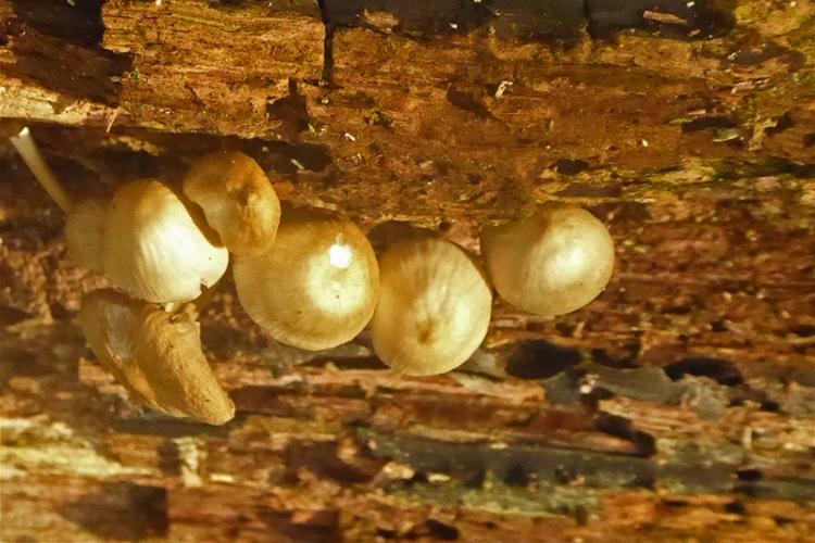 fungus on old log