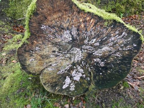 fungus on tree end
