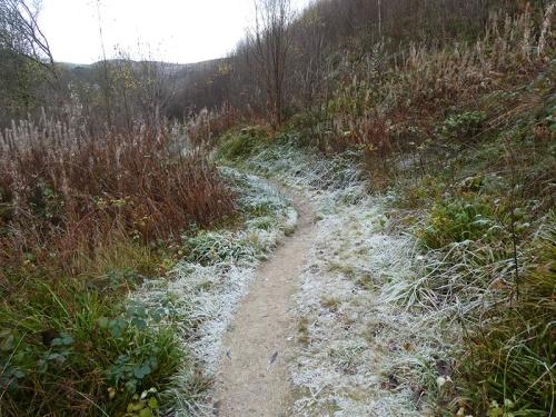 gaskells frosty