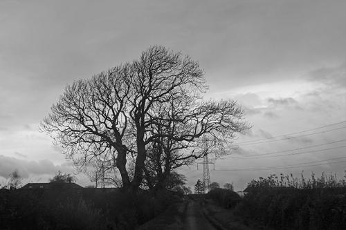 grey tree neasr chapelknow