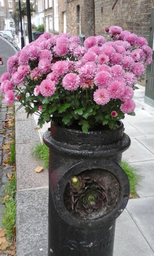 guerilla gardener