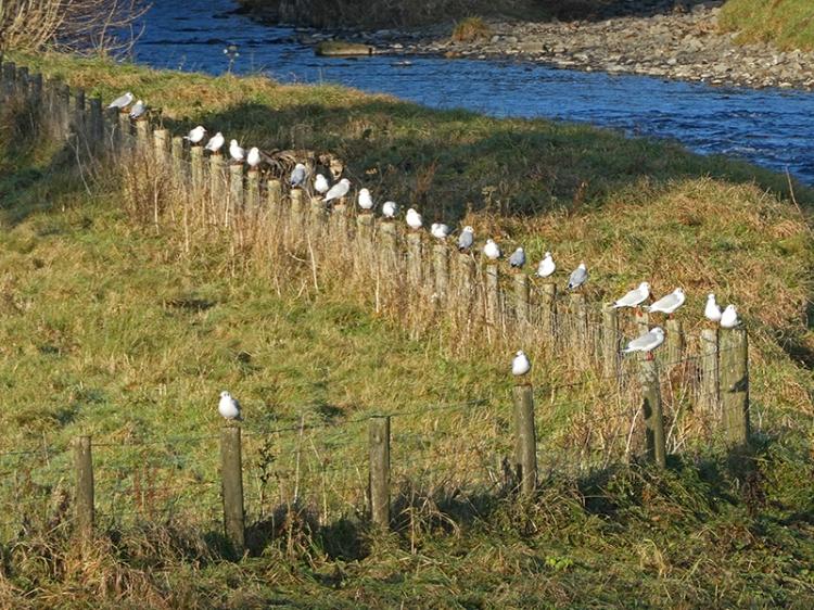 gulls on post