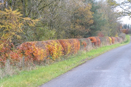hedge mossknowe